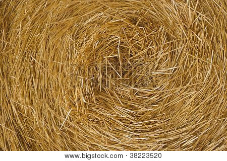 Hay Close Up