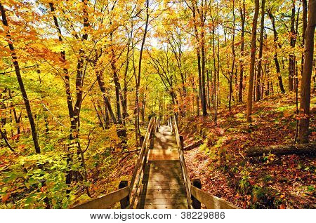 Trail Into The Fall Forest