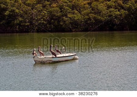Pelicans Sitting On A Boat