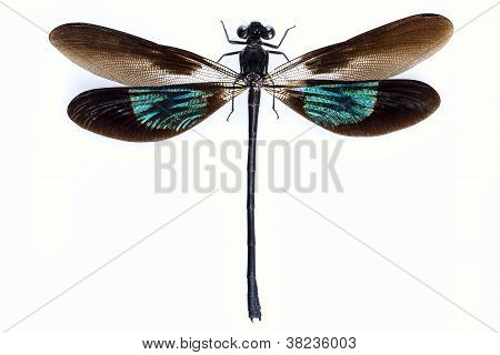 Dragonfly With Green And Brown Wings