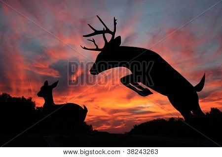 Leep In The Dark - White Tail Buck and Doe
