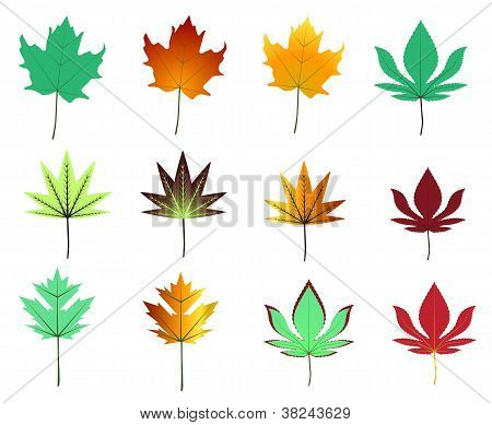Maple Leaves Assortment
