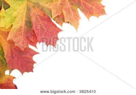 Autumn Leaf Border Edge On White