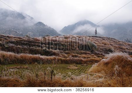 Rice field after great snow at south china