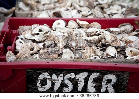 Oyster Shell Seafood