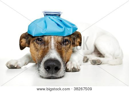 Sick Dog Fever Pain