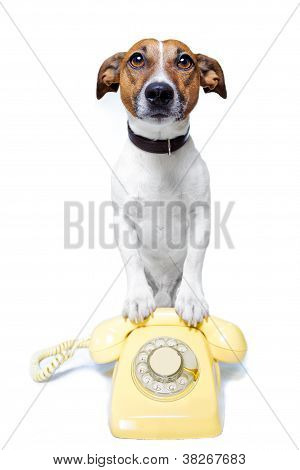 Dog Phone Call