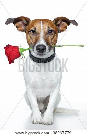 Perro de San Valentín