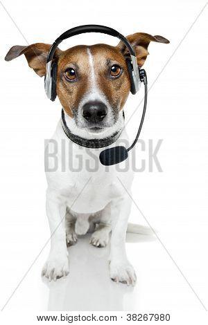 Dog Headset