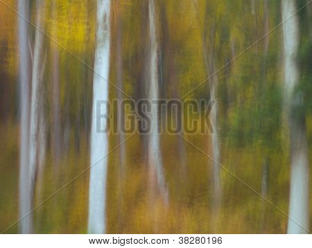 defocused image of tree trunks