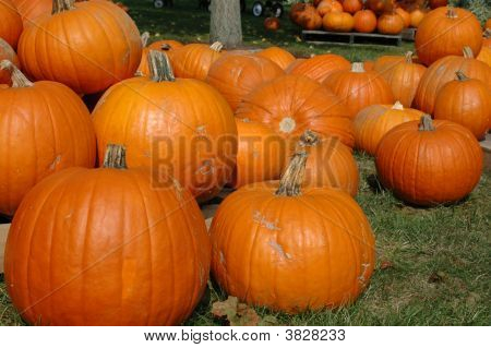 Pumpkins At A Roadside Stand