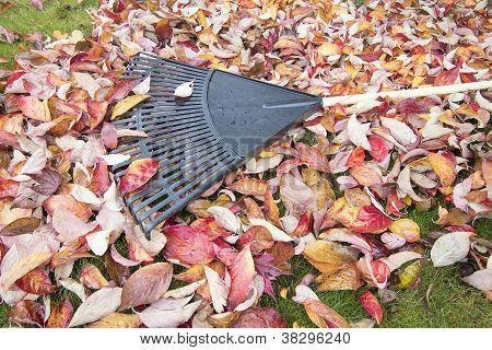 Garden Rake On Fallen Leaves