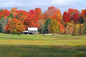 foto of fall trees  - taken in the muskoka region of ontario - JPG