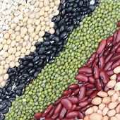stock photo of pinto bean  - Varieties of beans on Dish Job Tear Soy Bean Black Bean Mung Bean Red Kidney bean Ground bean - JPG