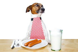 image of table manners  - dinner meal at table dog looking to the side - JPG