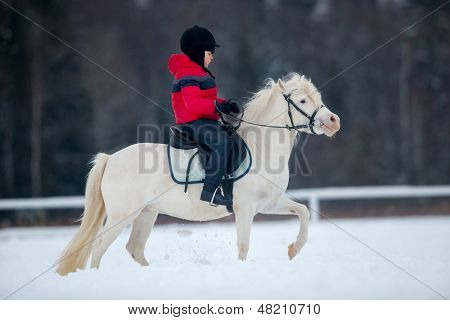 Horse and little boy - horseback riding.