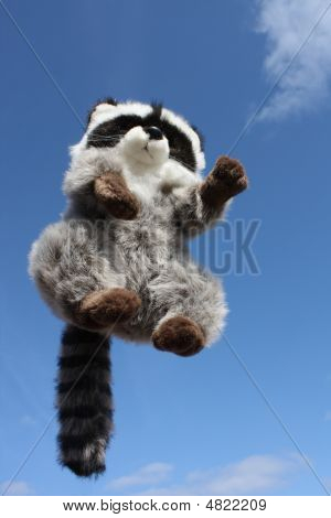 Jumping Racoon