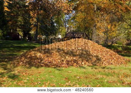 Raking Leaves Large Leaf Pile