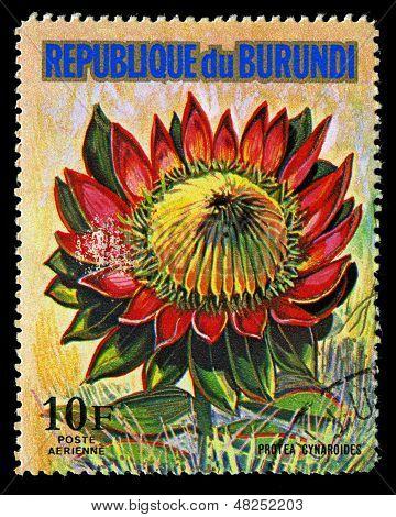 Republic Of Burundi - Circa 1974: A Stamp Printed In Republic Of Burundi Shows Protea Cynaroides, Se