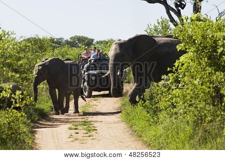 Two elephants crossing dirt road with tourists in jeep in background