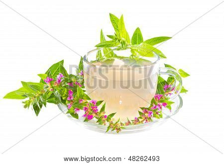 Tea Or Infusion Of Purple Lythrum