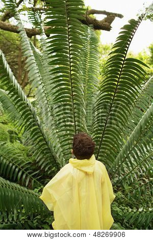 Rear view of young boy looking at large fern in forest during field trip