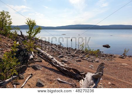 Picturesque Snag On The Lake In Summer Day
