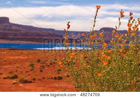 Wild Flowers Near Evaporation Ponds - Potash Road In Moab Utah