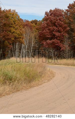 Dirt Road And Autumn Trees