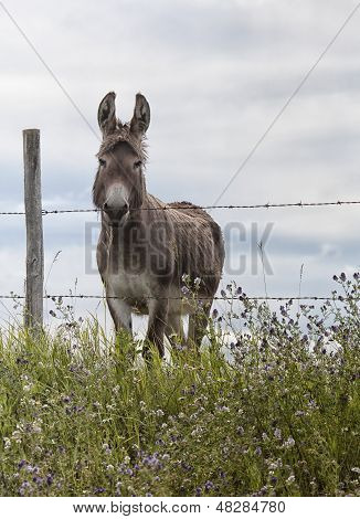 Donkey standing at a fence