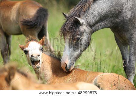 Junges Pony treffen Angst Fohlen