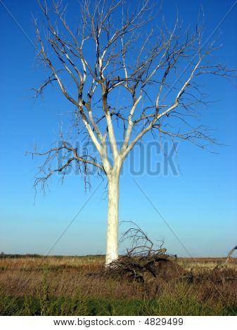 Bare Tree Prairie