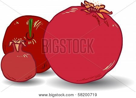 Pomegranates For Rosh Hashanah 1