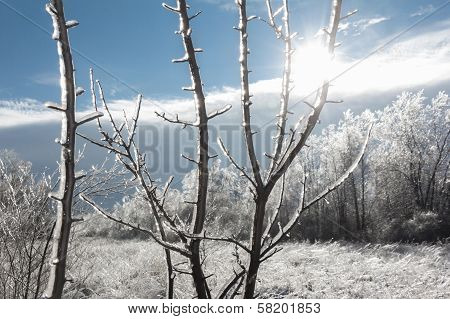 Winter Landscape With Sun Shining Through Ice-covered Branches