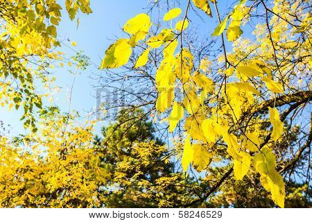 Autumn Colors On Trees