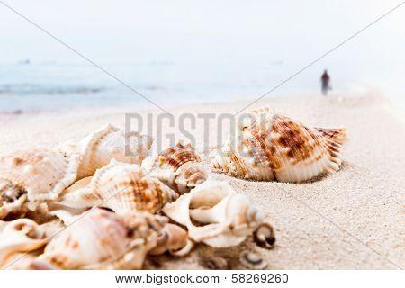 Cockleshells On Sea Sand