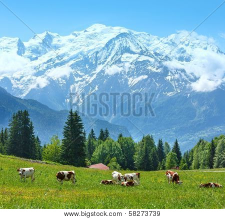 Herd Cows On Glade And Mont Blanc Mountain Massif View