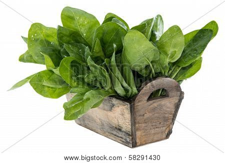 Spinach Leaves Isolated On White
