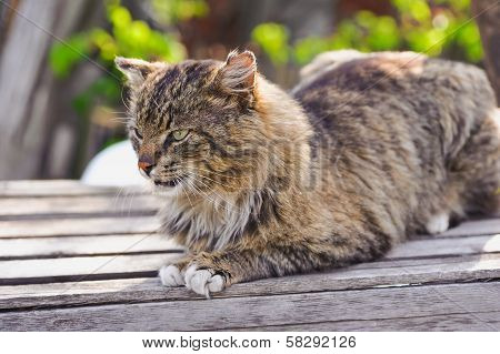 Unruffled Cat Sitting And Stern Looking