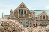 image of art gothic  - Close up of the collegiate gothic style Smith Hall building with Yoshino cherry trees  - JPG