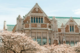 stock photo of quadrangles  - Close up of the collegiate gothic style Smith Hall building with Yoshino cherry trees  - JPG