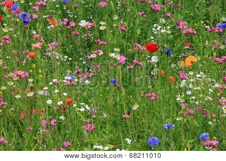 Flowers On A Meadow