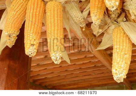 Toast Sweet Corn With The Husks Still On
