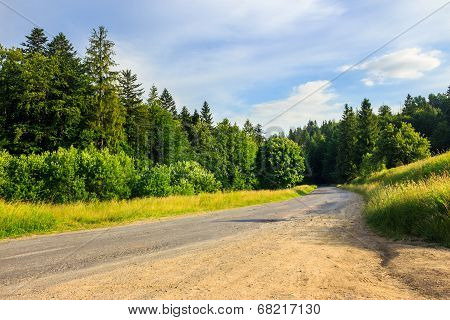 Going To Coniferous Forest