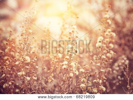 Beautiful floral field in sunny day, grunge style photo, abstract floral background, gorgeous mobile wallpaper, beauty of nature concept