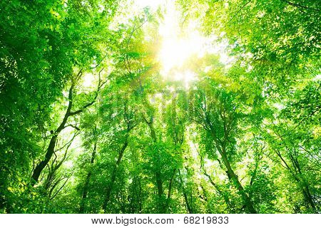 Abstract natural background, fresh green tree foliage in the forest, bright sunlight through tree twigs, beautiful nature in summer time