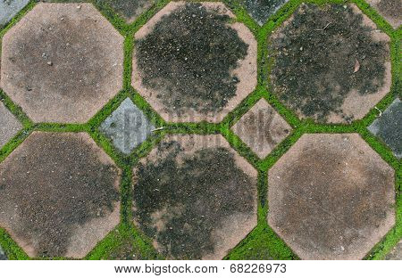 Interlocking Concrete Pavement With Moss Growing Along