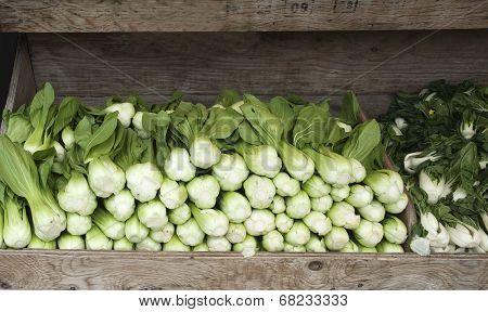 Fresh Bok Choy for Sale