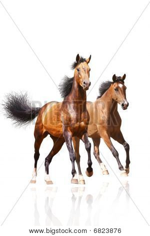 Two Horses On White