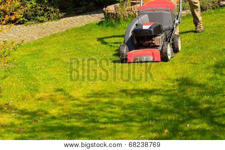 Gardening. Mowing Green Lawn With Red Lawnmower
